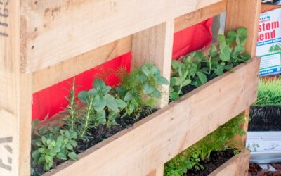 How to build a Vertical Pallet Garden