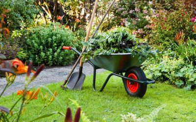 Fertilizer Basics # 2 When to Fertilize