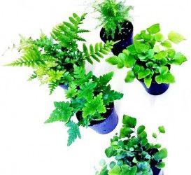 David Durrand, Home Gardener