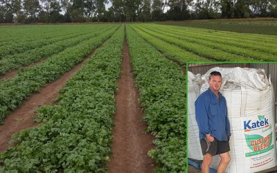 Reliability and Innovation allow Biloela Grower to aim for Top Yields