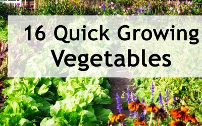 16 Quick Growing Vegetables you can Harvest in 3-8 Weeks!